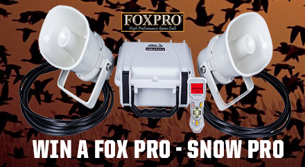 giveaway-foxpro-popup.png